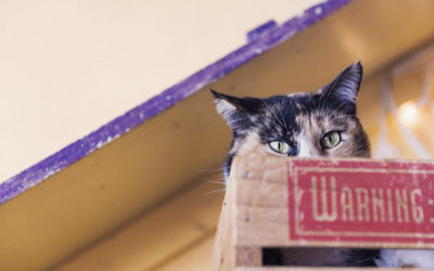 Avoid Pet Destruction – How to Choose Window Coverings and Keep Your Pet Happy