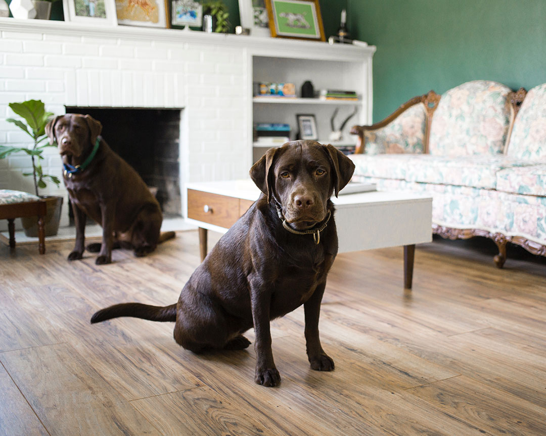 two dogs sit on wooden floor in a traditional living room